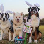 Pasqua Pet Friendly in Puglia